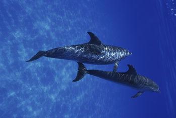 National Aquarium Closes For Renovations