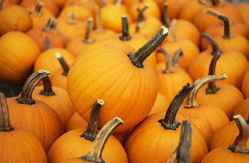 Consumers Who Look For Pumpkins Should Find Good Ones