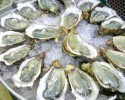 Oysters 111510 clipart