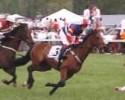 Foxfield Horses 2008