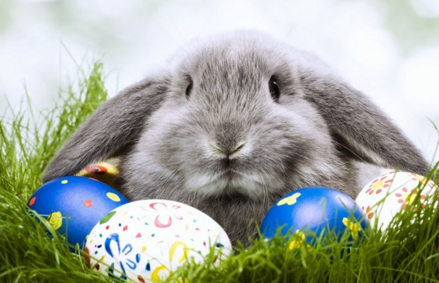 Morning News Weekends: The Easter Bunny!