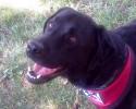 Theo Courthouse Dog 061714 DZ