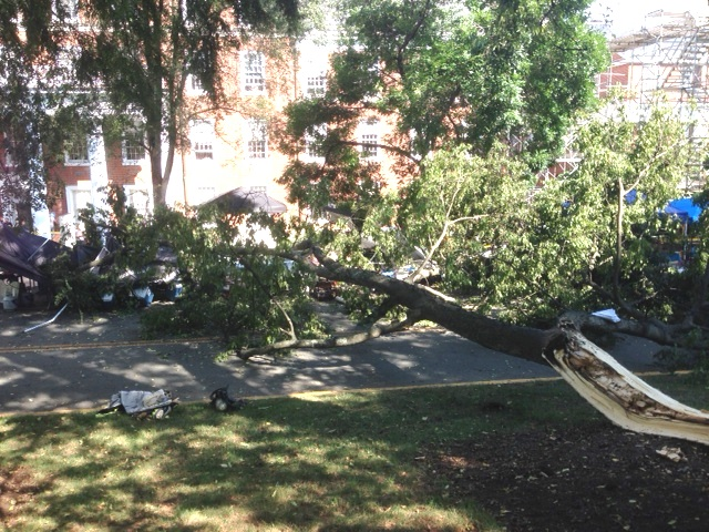 Limb Falls From Rotting Tree Injuring Several At UVA