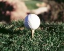 Golf Ball On Tee (clipart)
