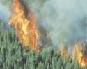 Forest Fire CLIP ART